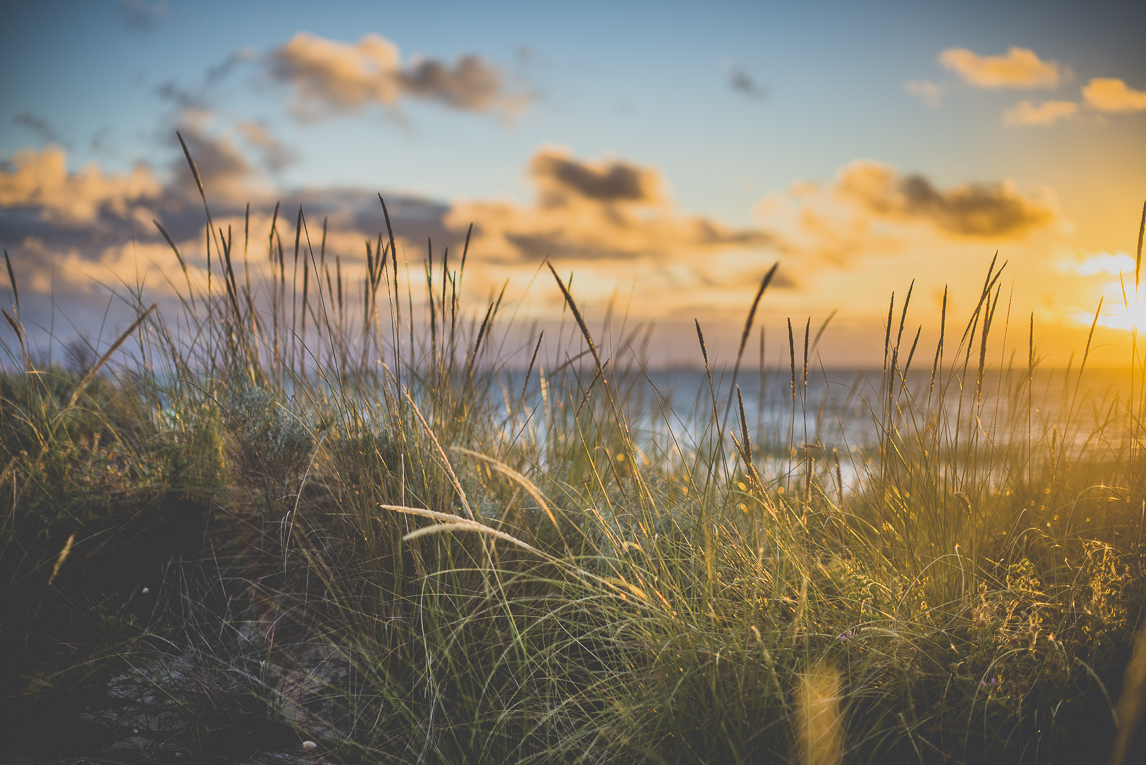 rozimages - pregnancy photography - maternity photography - tall grass and sea - City Beach, Perth, Australia