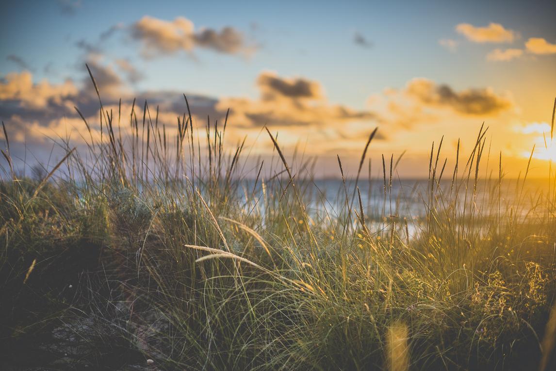 rozimages - photographie de grossesse - hautes herbes et mer - City Beach, Perth, Australie