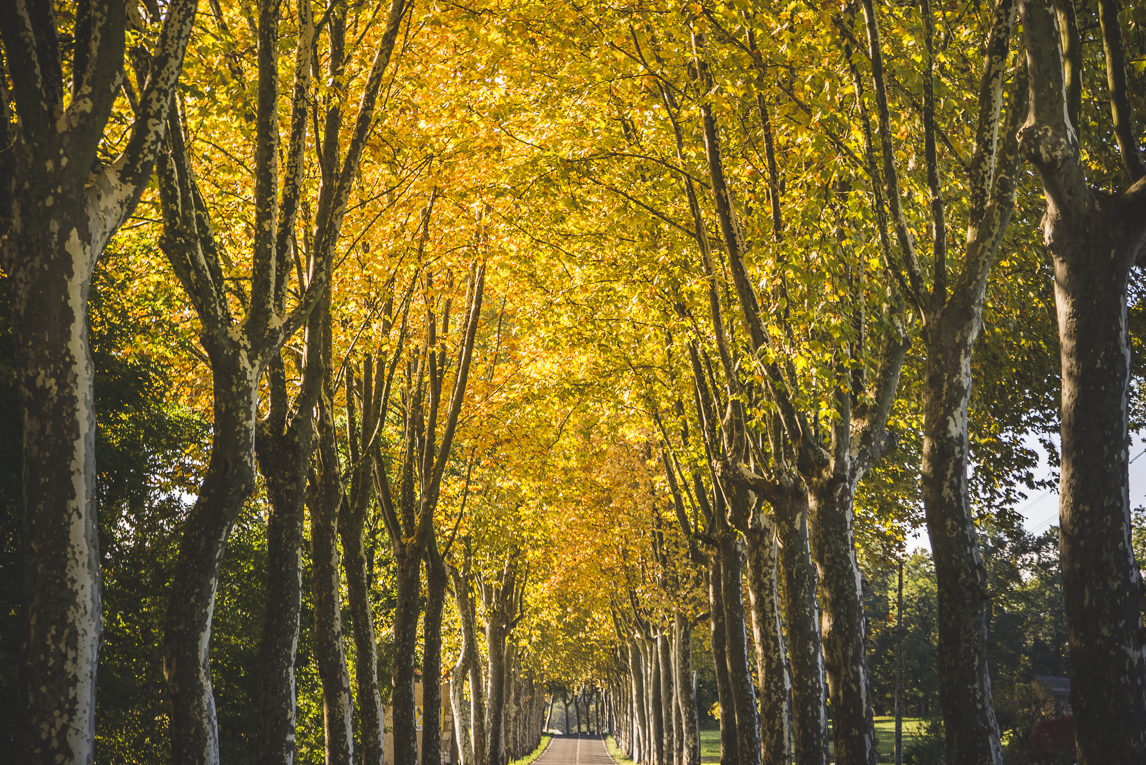 rozimages - travel photography - country road lined with tall trees with yellow leaves - Le Plan, France