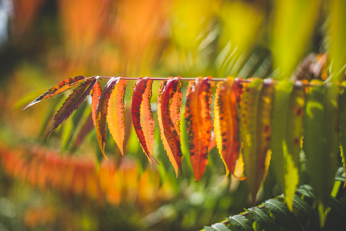 rozimages - travel photography - autumn coloured leaves - Mondavezan, France