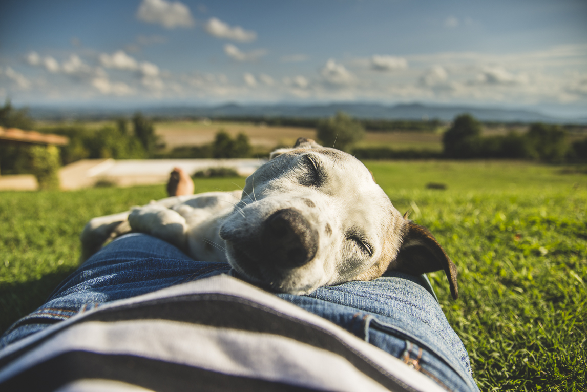 rozimages - travel photography - dog sleeping on human tummy - Mondavezan, France