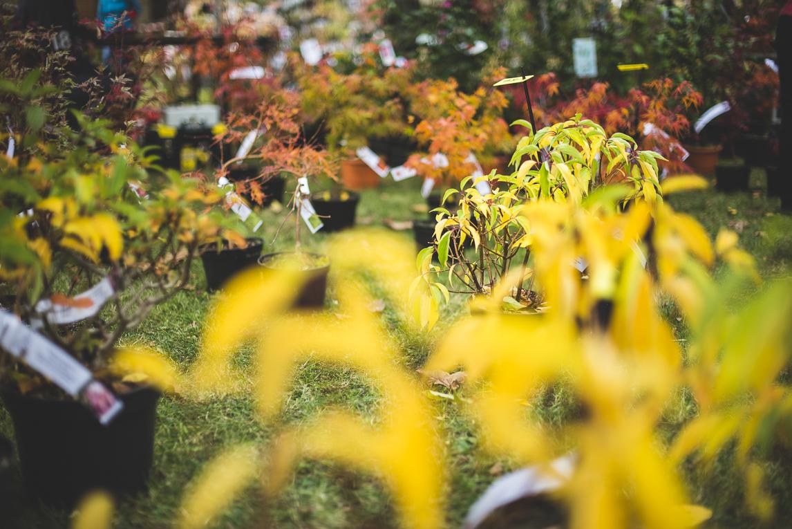 rozimages - photographie évènementielle - Expo Vente de Végétaux Rares 2015 - plantes avec feuilles de couleurs chaudes - St Elix le Chateau, France