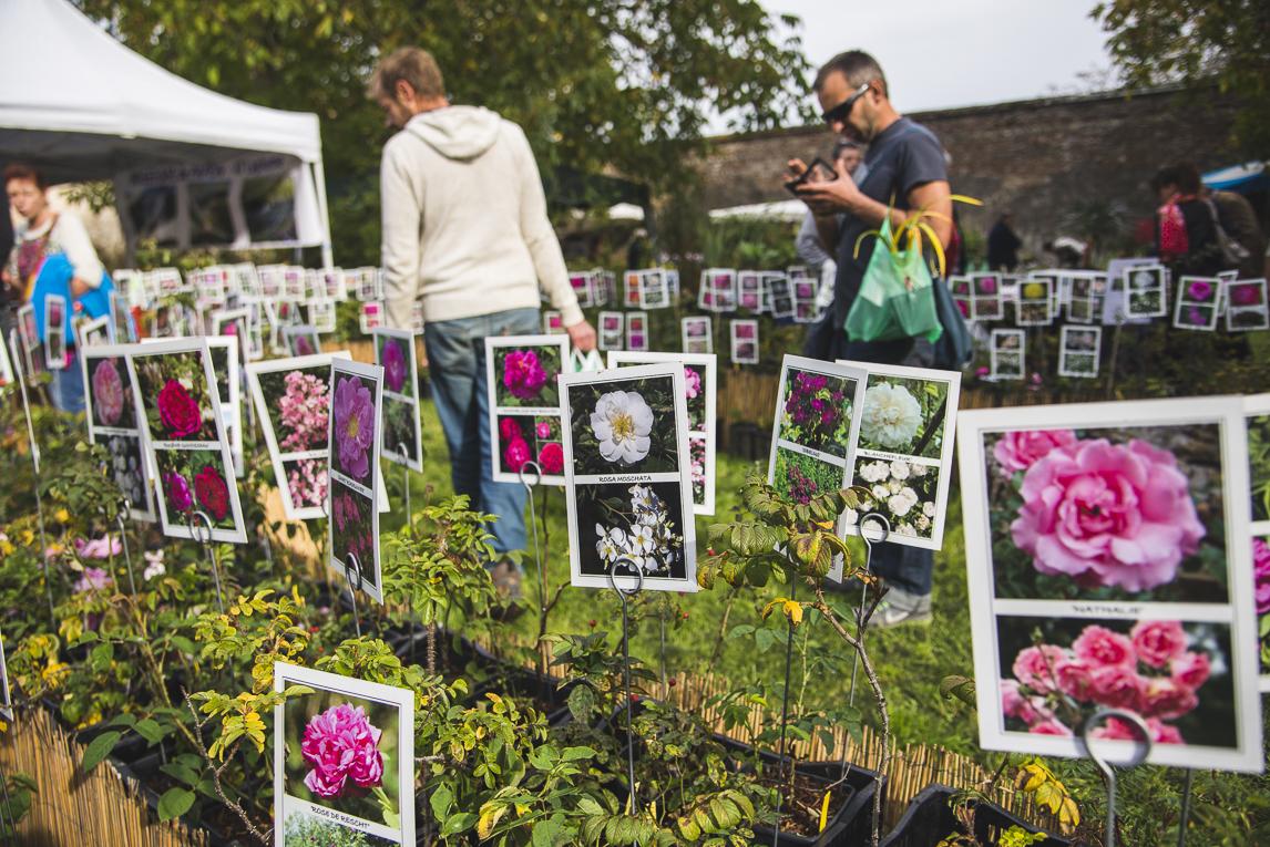 rozimages - photographie évènementielle - Expo Vente de Végétaux Rares 2015 - rangées de fleurs en présentation avec panneaux pour chaque fleur, et acheteurs potentiels regardant - St Elix le Chateau, France