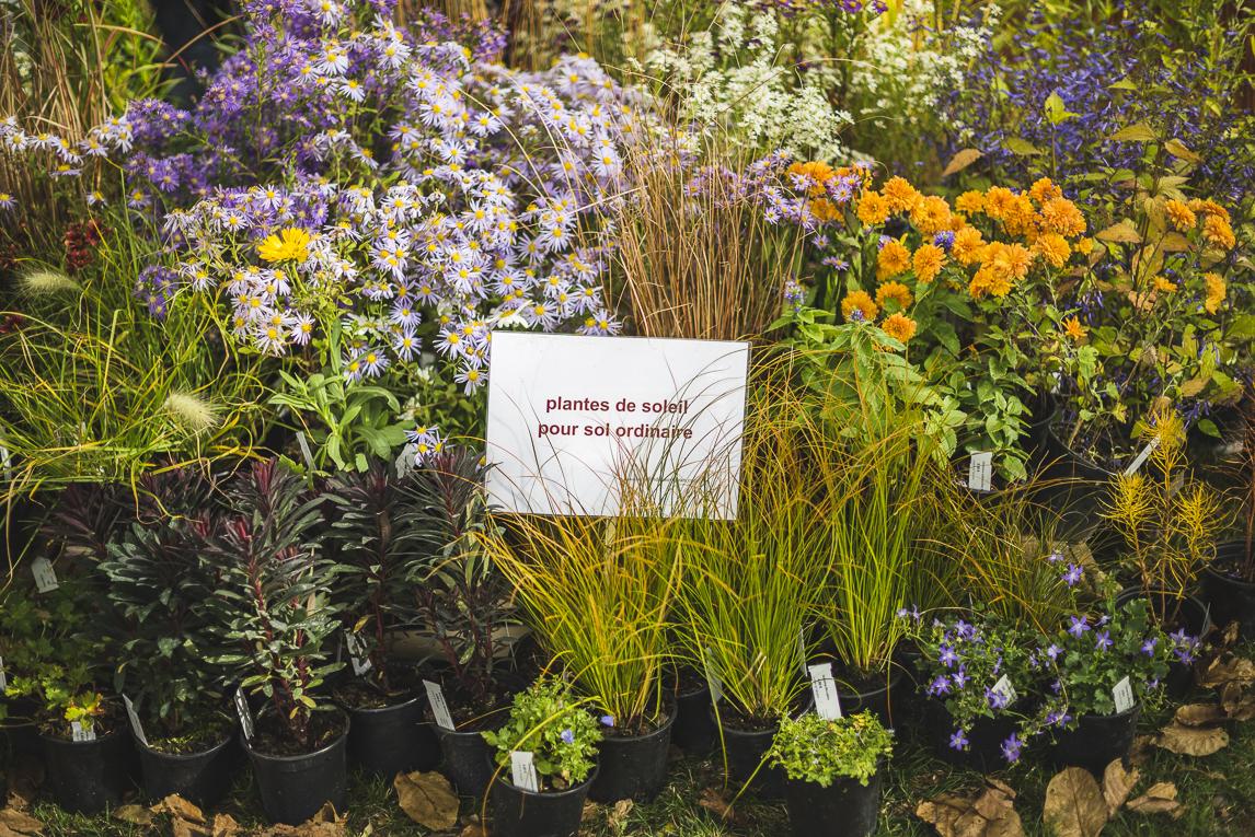 rozimages - photographie évènementielle - Expo Vente de Végétaux Rares 2015 - présentoir de plantes avec panneau au milieu - St Elix le Chateau, France