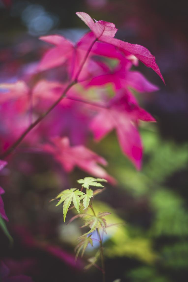 rozimages - photographie évènementielle - Expo Vente de Végétaux Rares 2015 - feuilles de couleur - St Elix le Chateau, France