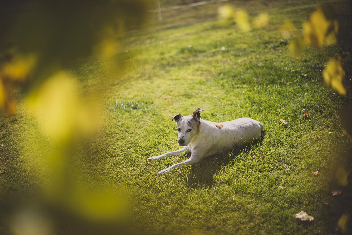 rozimages - photographie de voyage - chien allongé dans l'herbe - Mondavezan, France