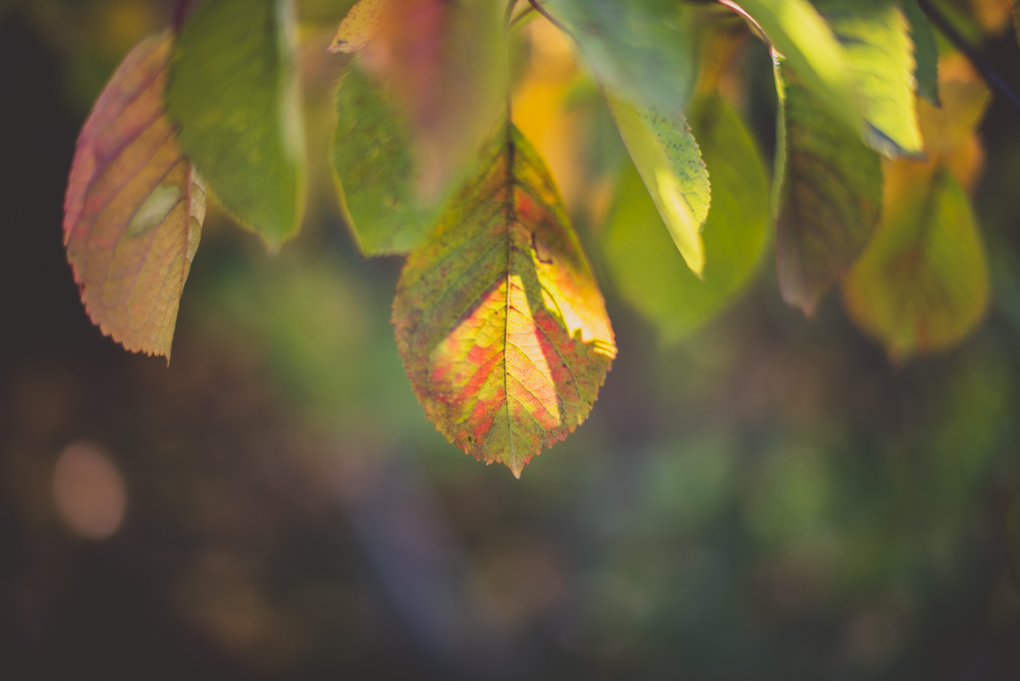 rozimages - travel photography - leaves - Mondavezan, France
