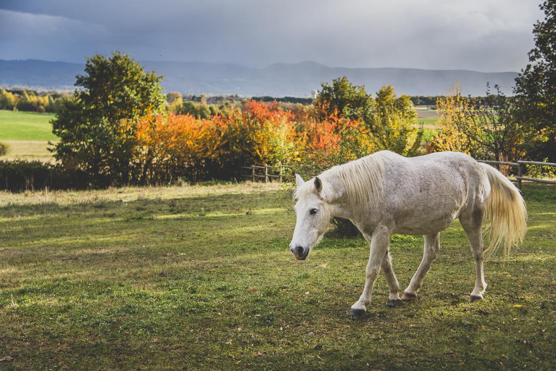 rozimages - travel photography - white horse - Mondavezan, France