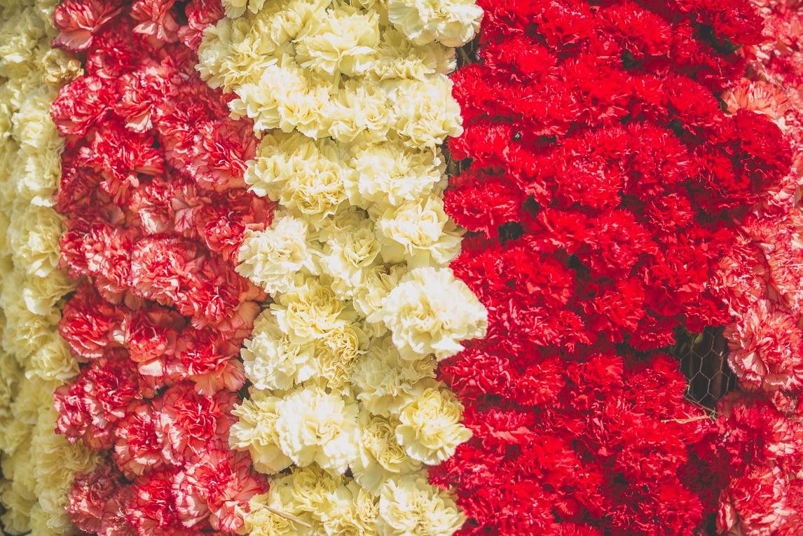 Fête des fleurs Cazères 2016 - char décoré avec des fleurs d'oeillets - Photographe évènementiel
