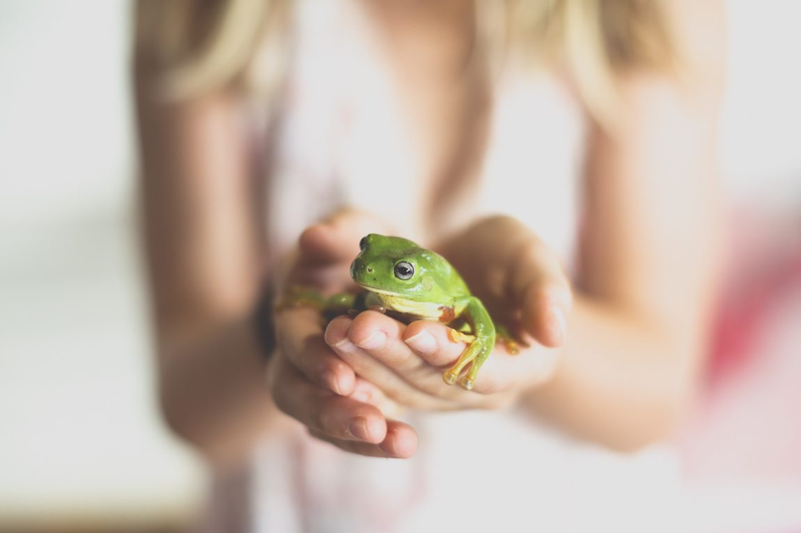 Séance photo famille à domicile – grenouille verte tenue dans les mains d'une fille