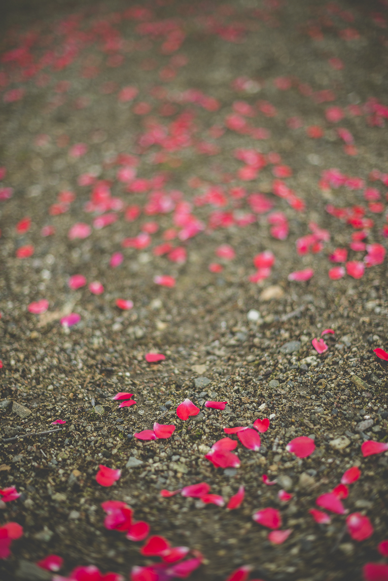 Wedding Photography Toulouse - rose petals on pathway - Wedding Photographer