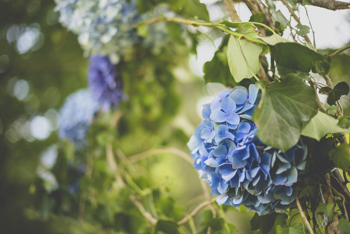 Wedding Photography Brittany - Decoration with hydrangea flowers for outdoor wedding ceremony - Wedding Photographer