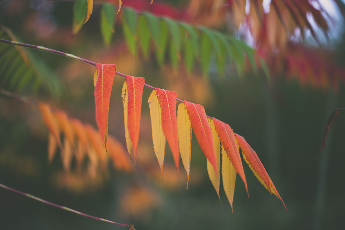 Photography of autumn colours 2016 - red and green leaves - Nature Photographer