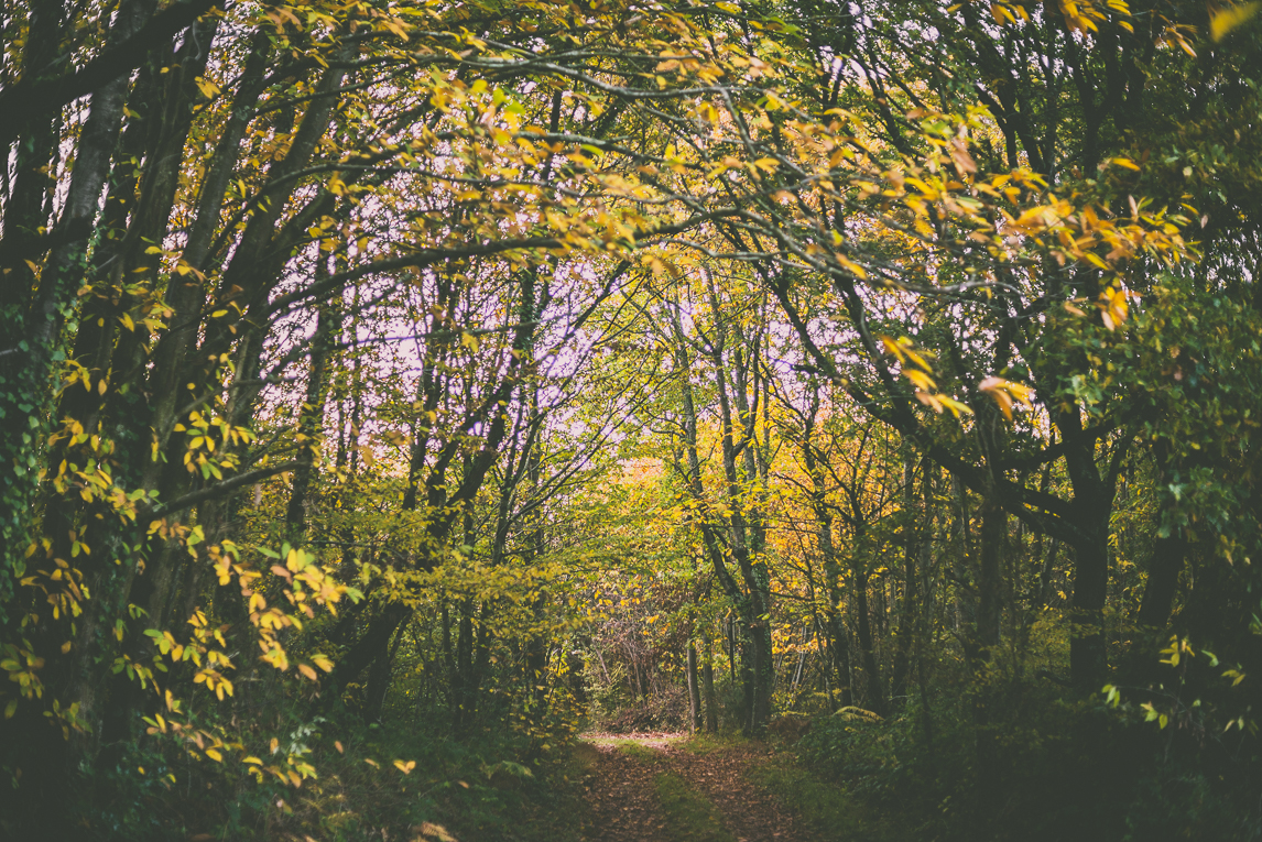Photography of autumn colours 2016 - forest path in autumn - Nature Photographer