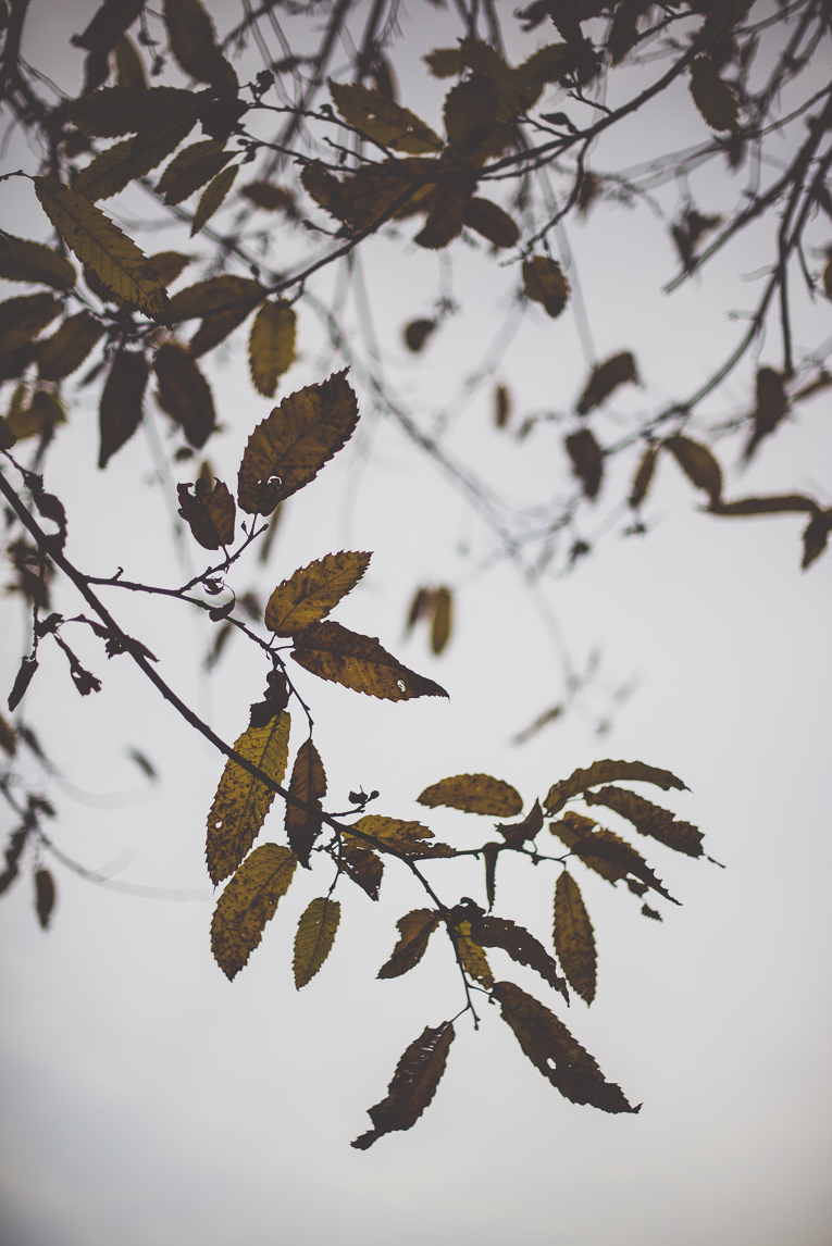Photography of autumn colours 2016 - branches and leaves of chestnut tree - Nature Photographer
