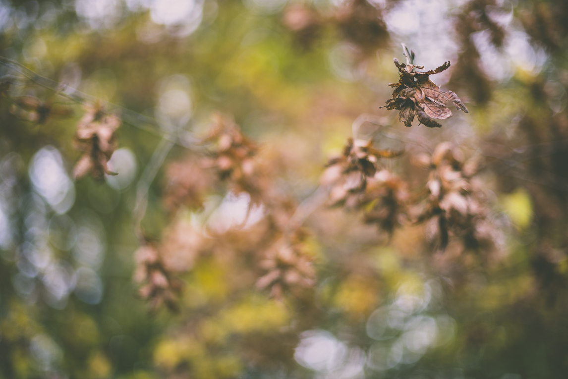 Photography of autumn colours 2016 - brown leaves - Nature Photographer