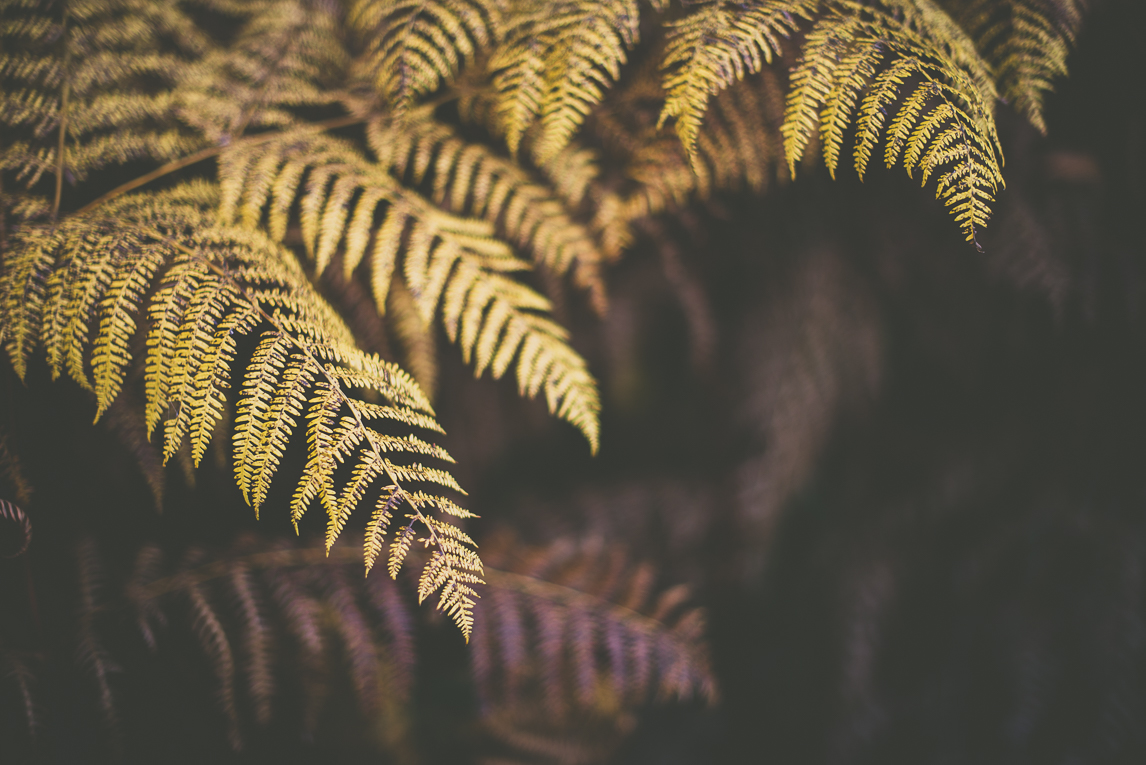Photography of autumn colours 2016 - yellow ferns - Nature Photographer