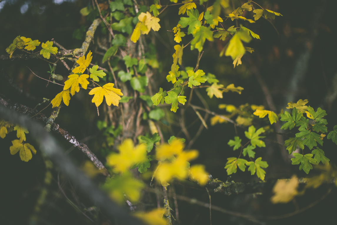 Photography of autumn colours 2016 - yellow and green leaves - Nature Photographer
