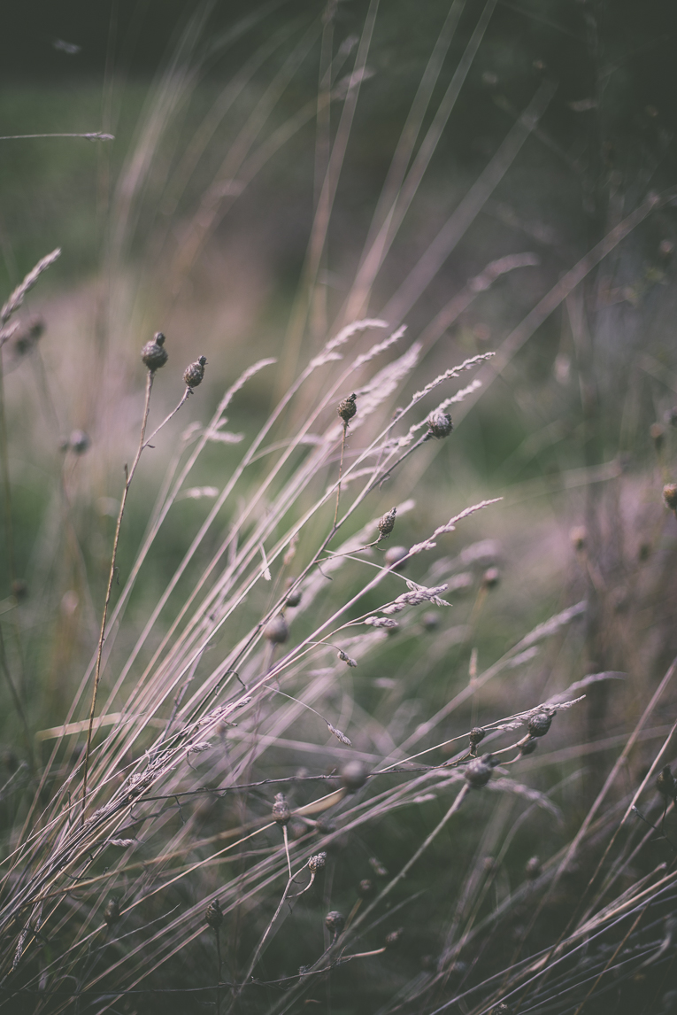 Photography of autumn colours 2016 - tall grass - Nature Photographer