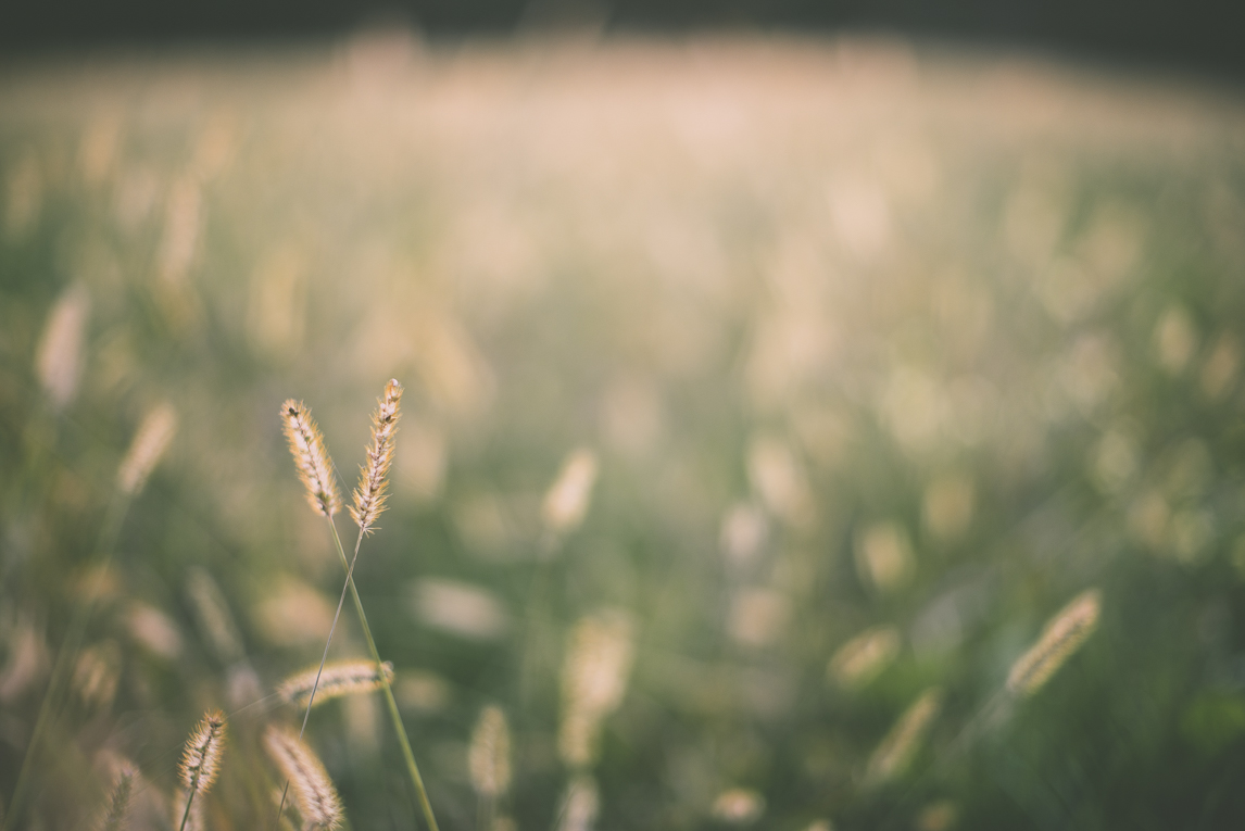 Photography of autumn colours 2016 - field of tall grass - Nature Photographer