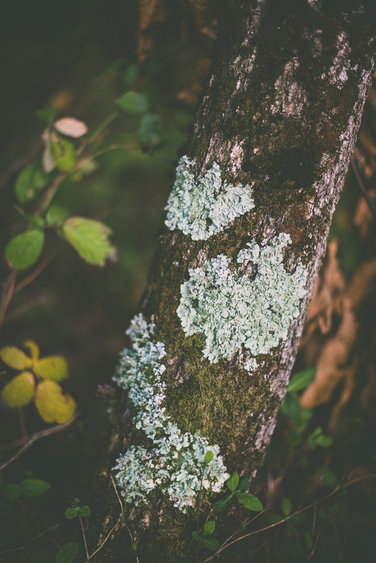 Photography of autumn colours 2016 - moss on tree trunk - Nature Photographer