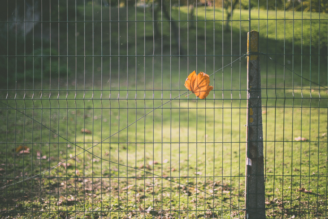 Photography of autumn colours - orange leaf stuck on wire fence - Nature Photographer