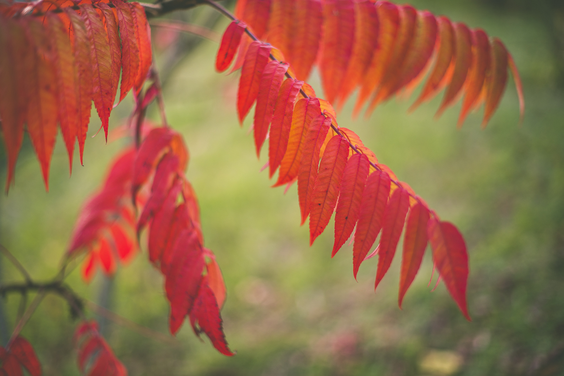 Photography of autumn colours 2016 - red leaves - Nature Photographer