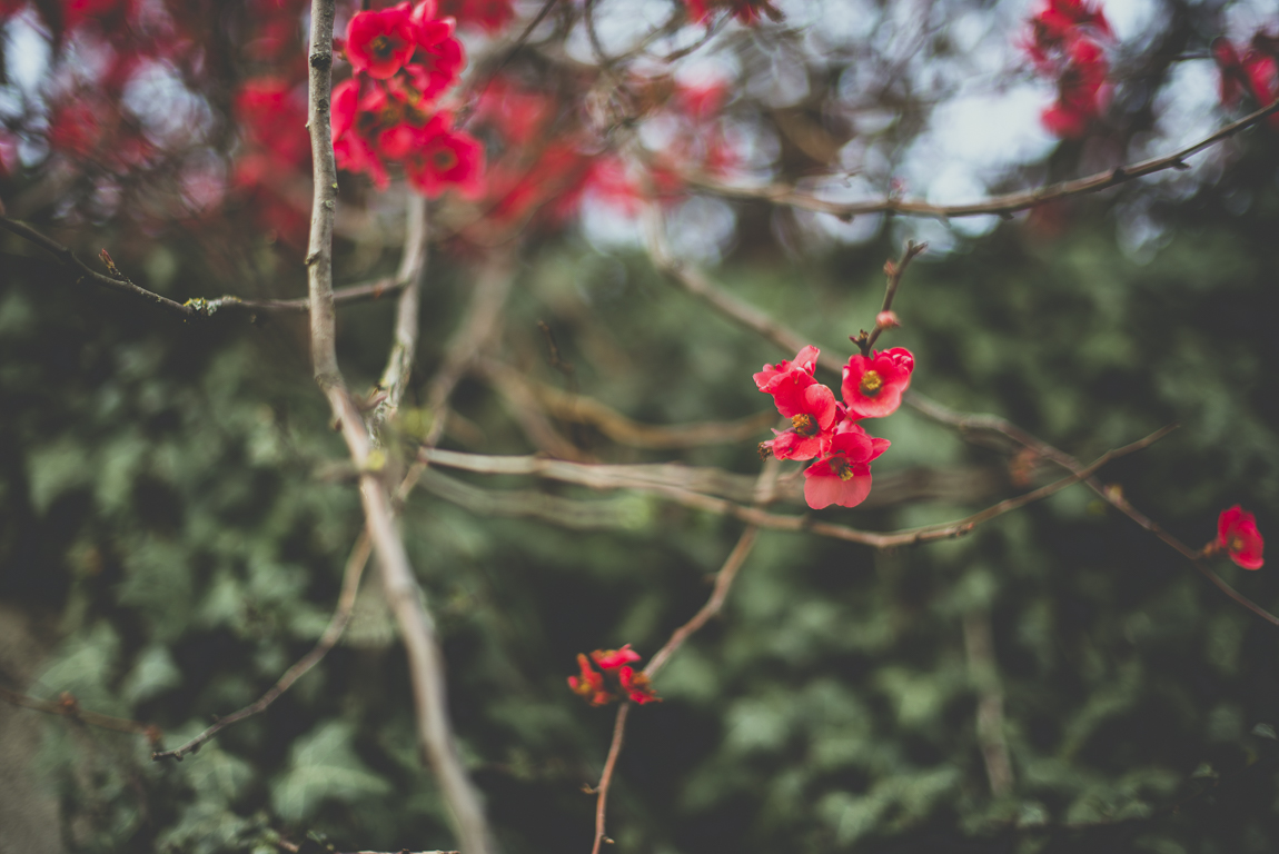 Reportage village Alan - fleurs roses - Photographe voyage