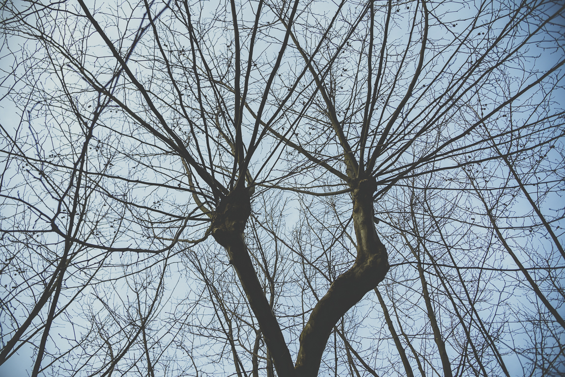 Reportage village Alan - branches d'arbre en hiver - Photographe voyage