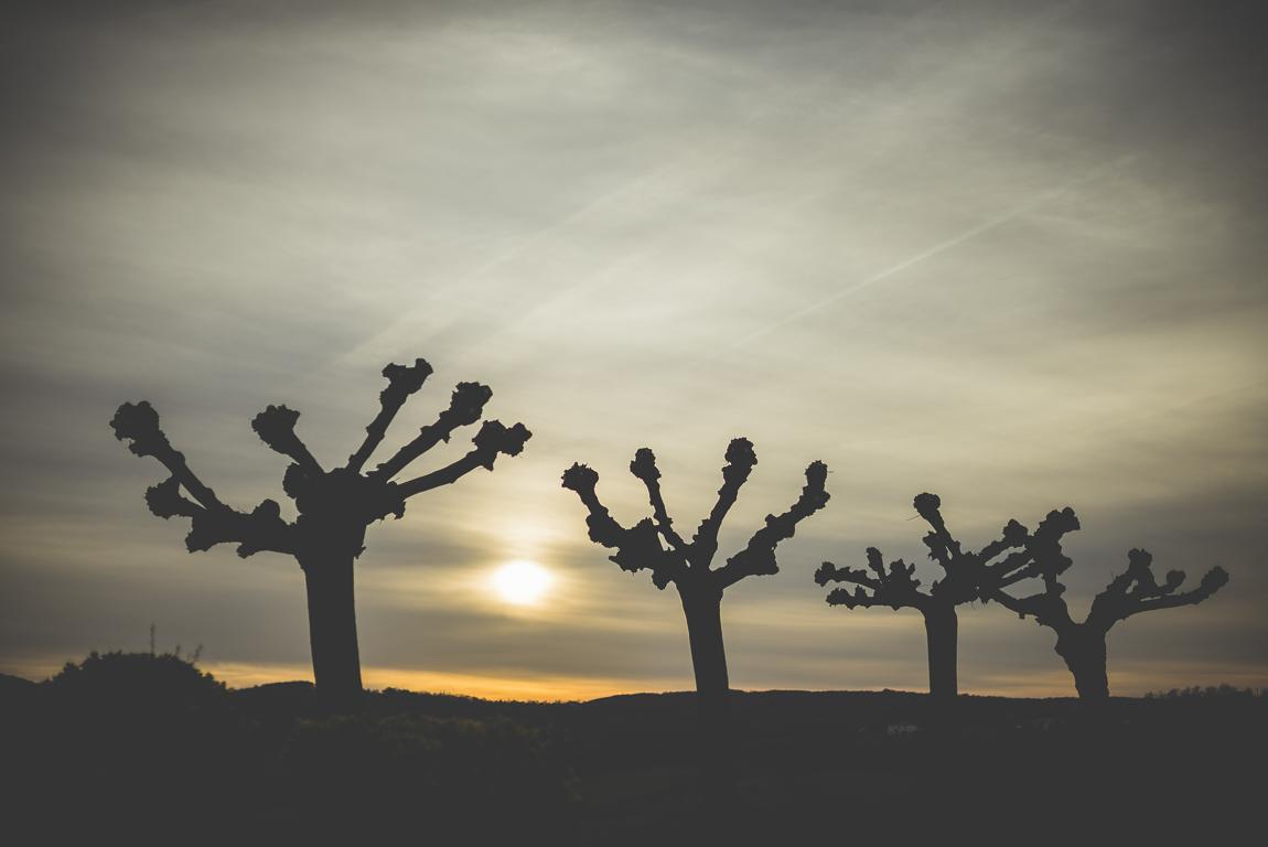 Reportage village Alan - silhouettes de platanes taillés - Photographe voyage