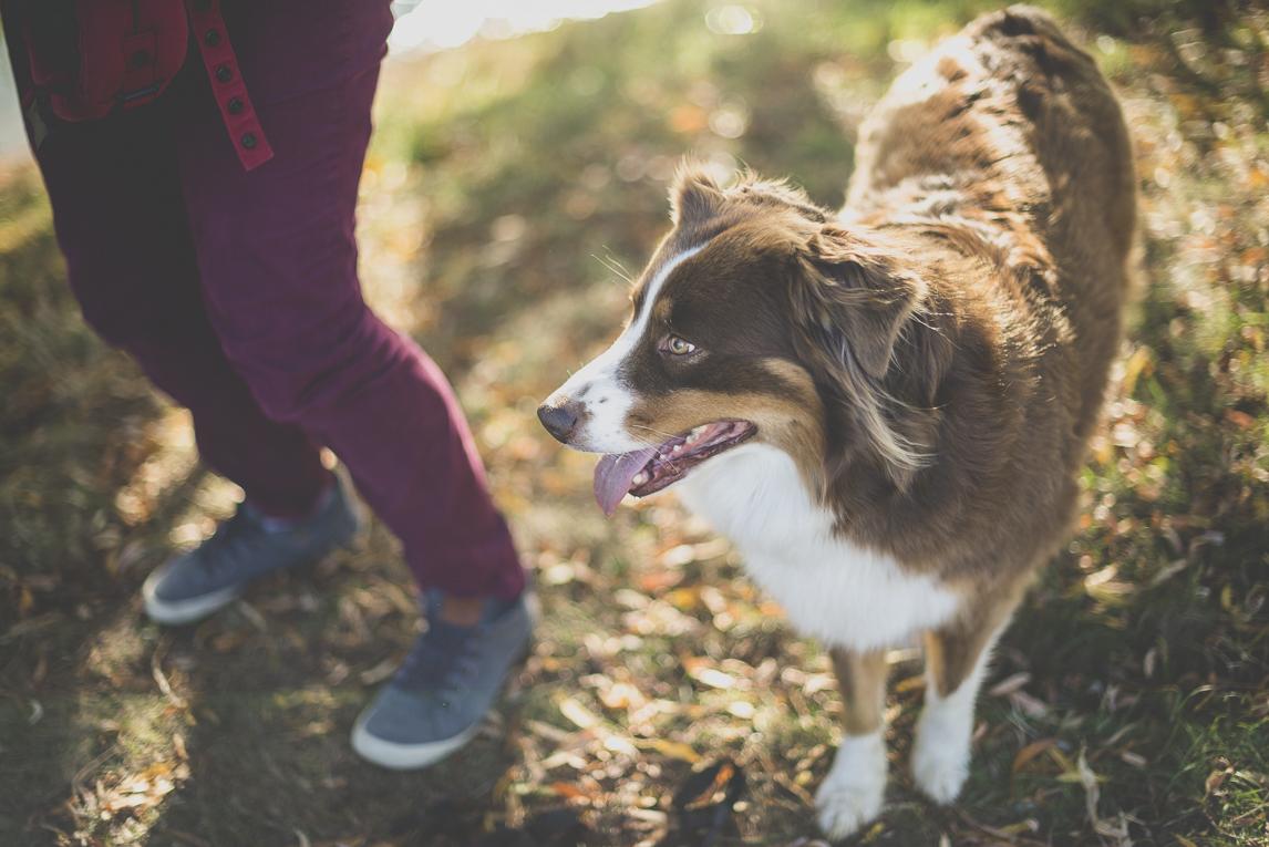 Séance photo en famille Ariège - chien - Photographe famille