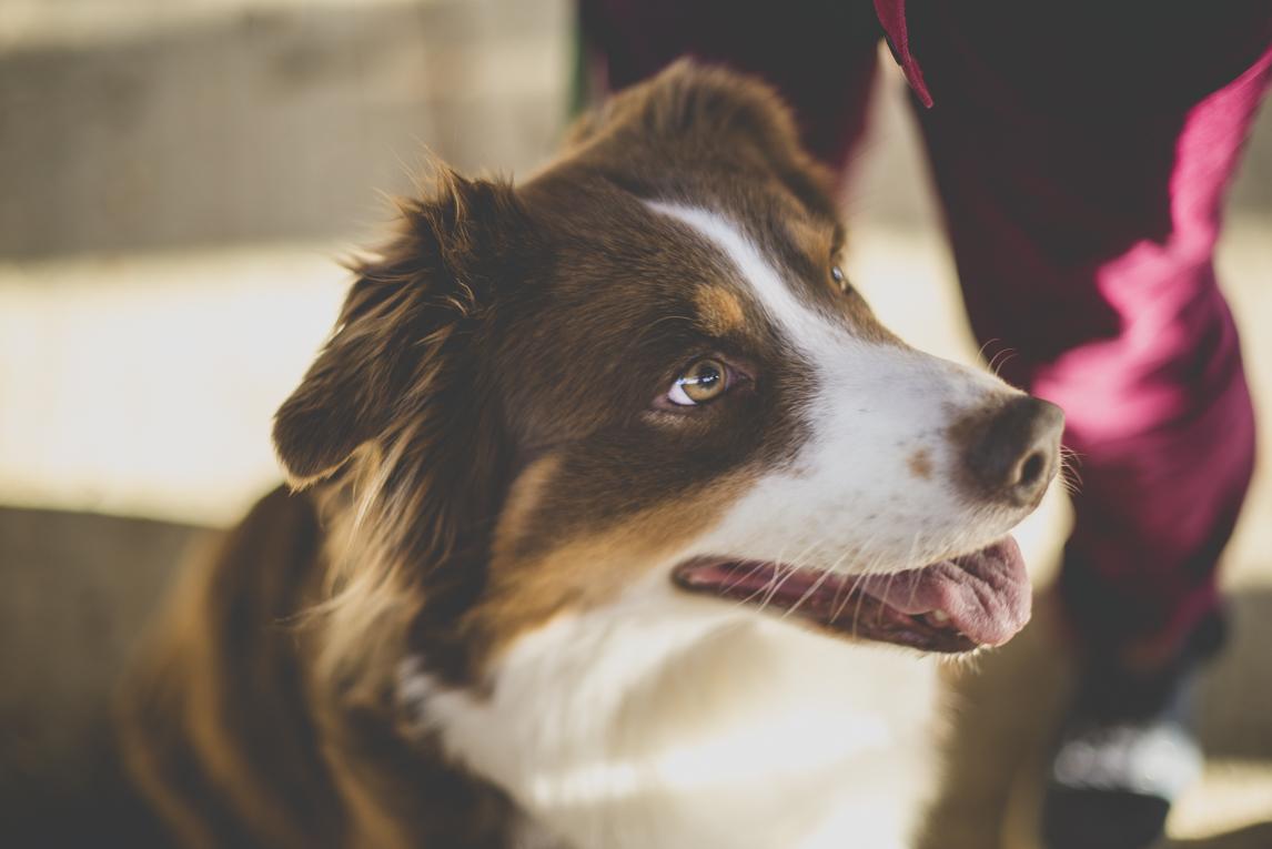 Séance photo en famille Ariège - portrait chien - Photographe famille