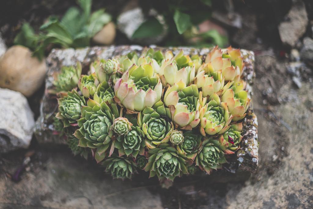Reportage mariage Haute-Garonne - plantes succulentes - Photographe mariage