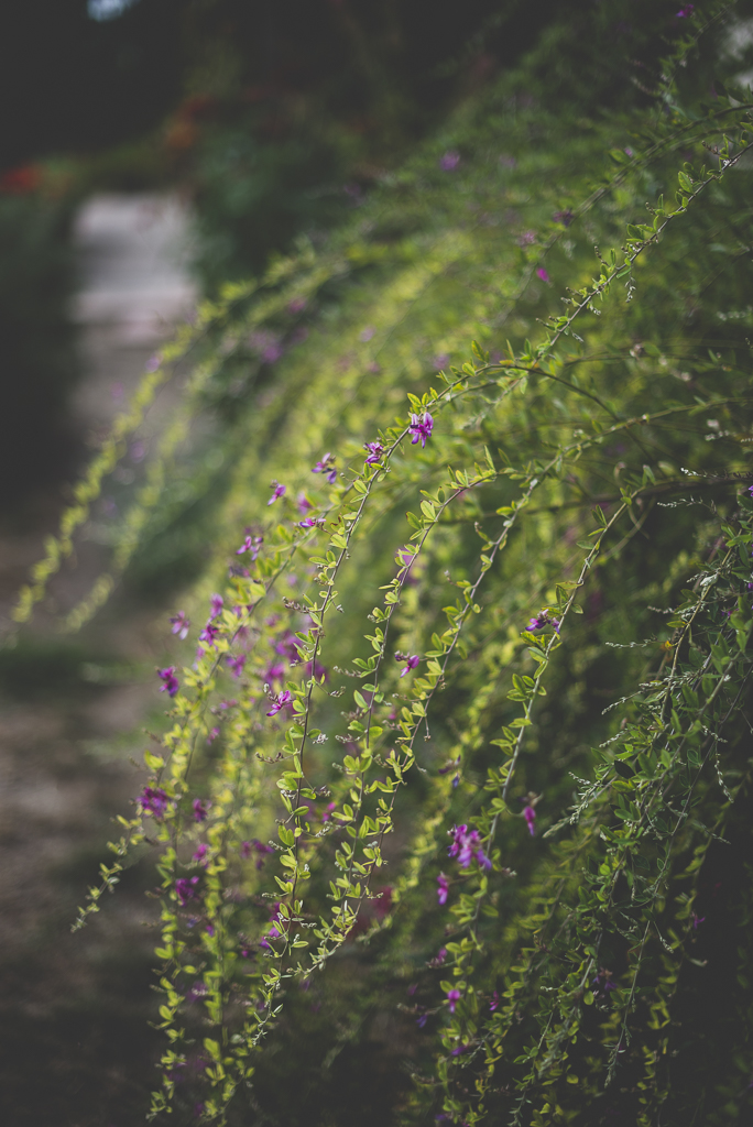 Reportage mariage Haute-Garonne - plantes tombantes - Photographe mariage
