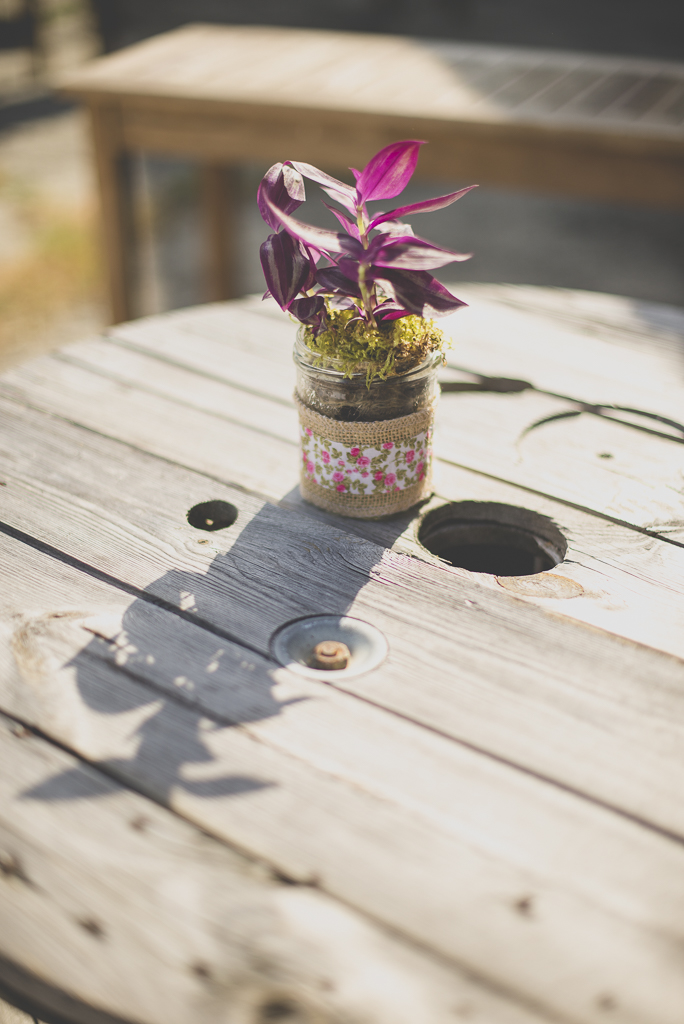 Wedding Photography Haute-Garonne - plante rose sur table basse - Wedding Photographer Saint-Gaudens
