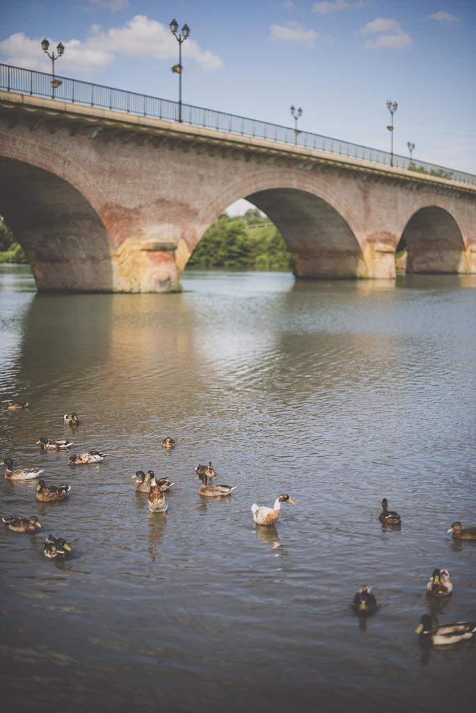 Séance famille Haute-Garonne - pont et canards sur la Garonne - Photographe famille Toulouse