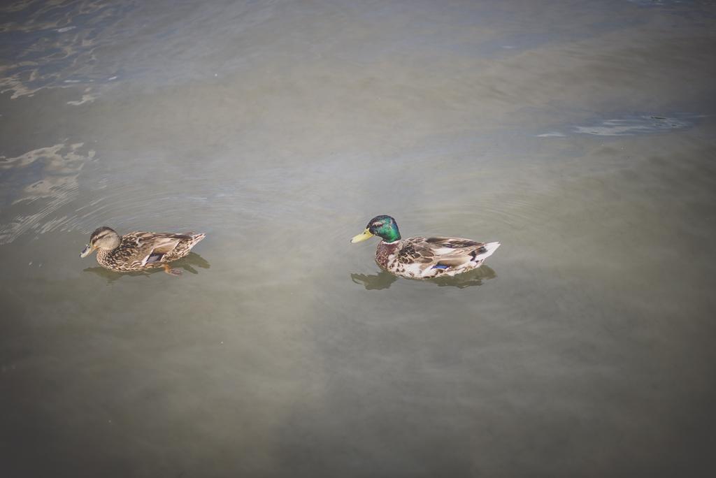 Séance famille Haute-Garonne - canards sur la Garonne - Photographe famille Toulouse