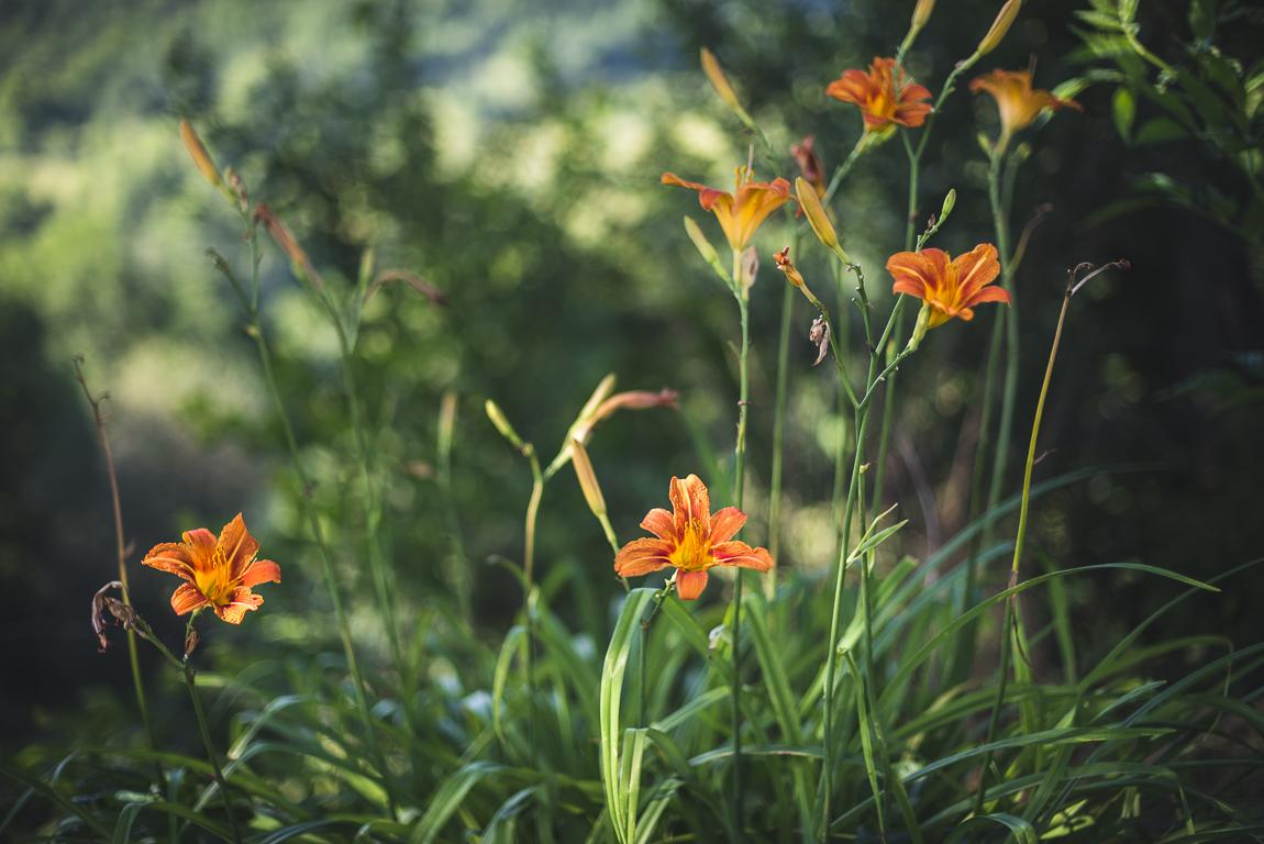 Séance photo chambres d'hôtes Ariège - fleurs oranges - Photographe B&B