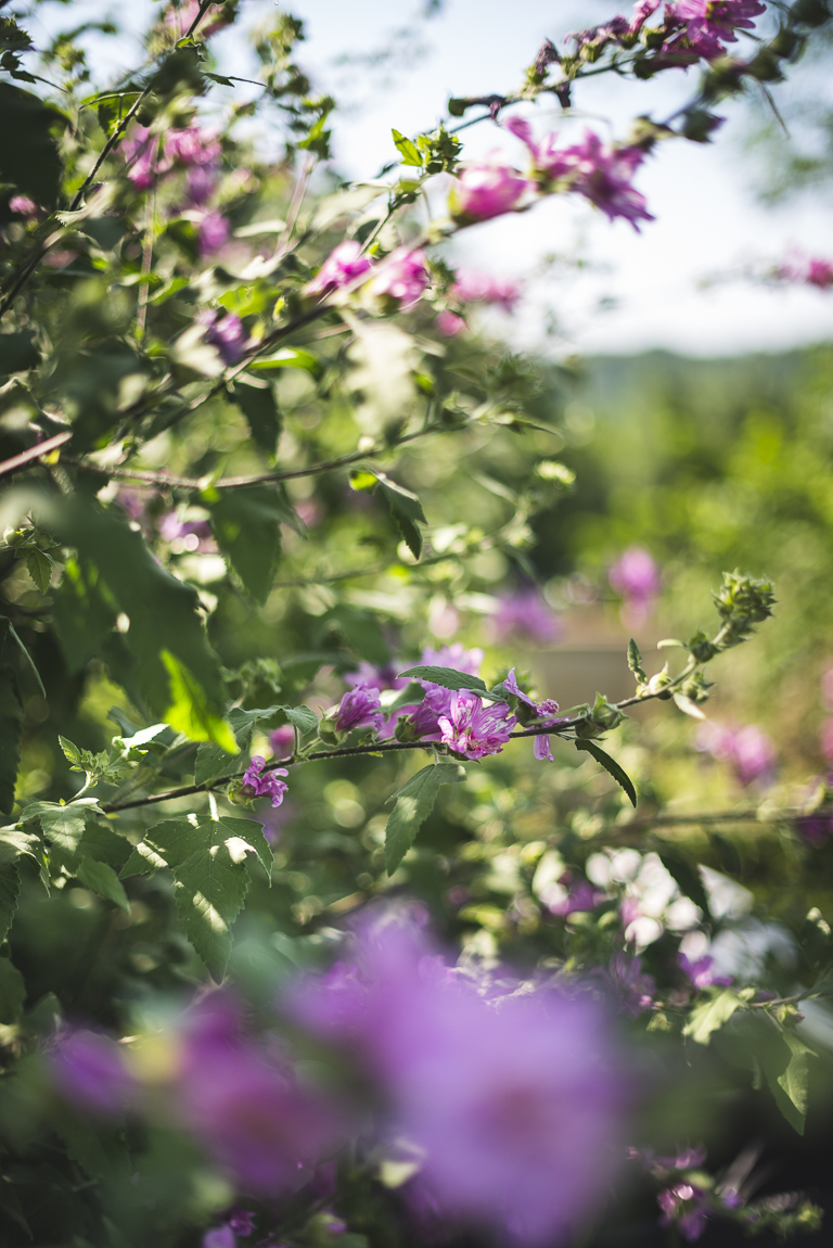 Séance photo chambres d'hôtes Ariège - fleurs roses - Photographe B&B