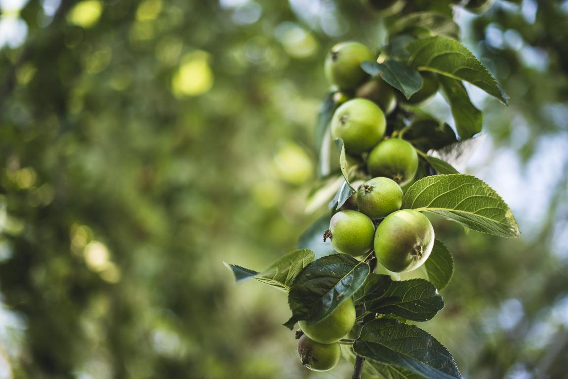Séance photo chambres d'hôtes Ariège - pommes vertes - Photographe B&B