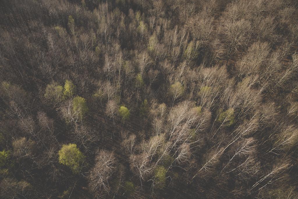 Photos vol montgolfière Haute-Garonne - forêt - Photographe Toulouse