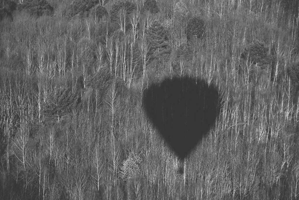 Photos vol montgolfière Haute-Garonne - ombre montgolfière sur arbres nus noir et blanc - Photographe Toulouse
