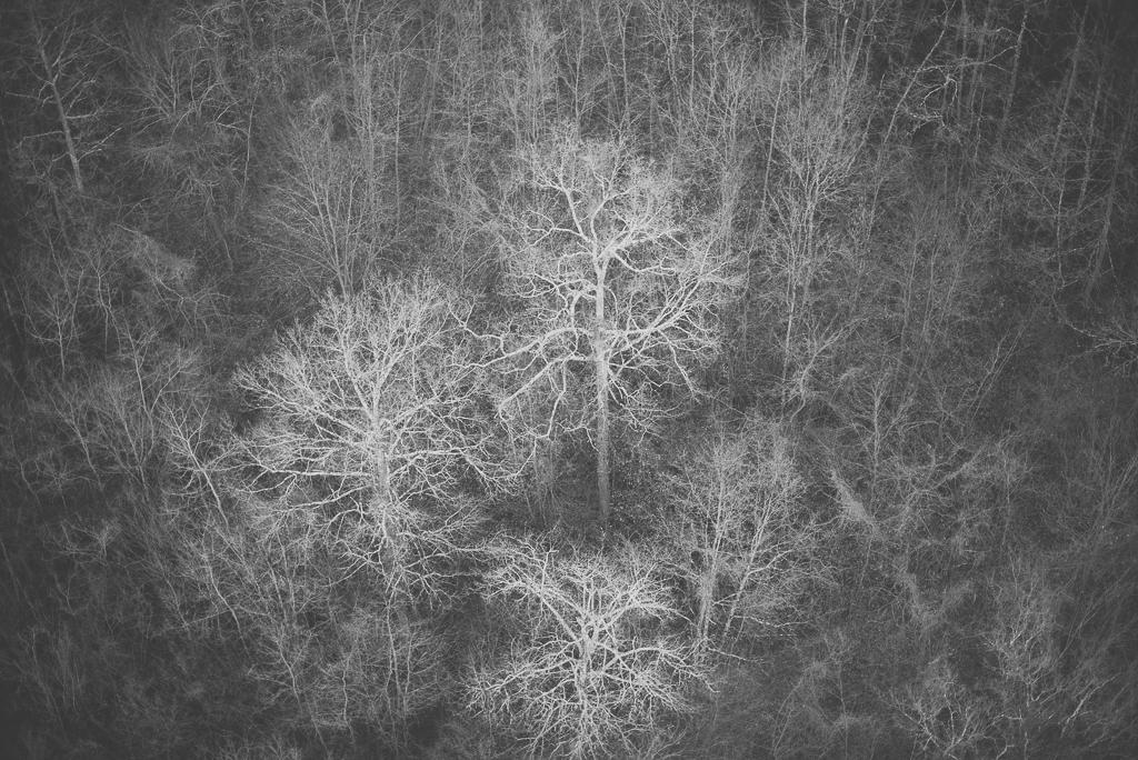 Photos vol montgolfière Haute-Garonne - arbres nus - Photographe Toulouse