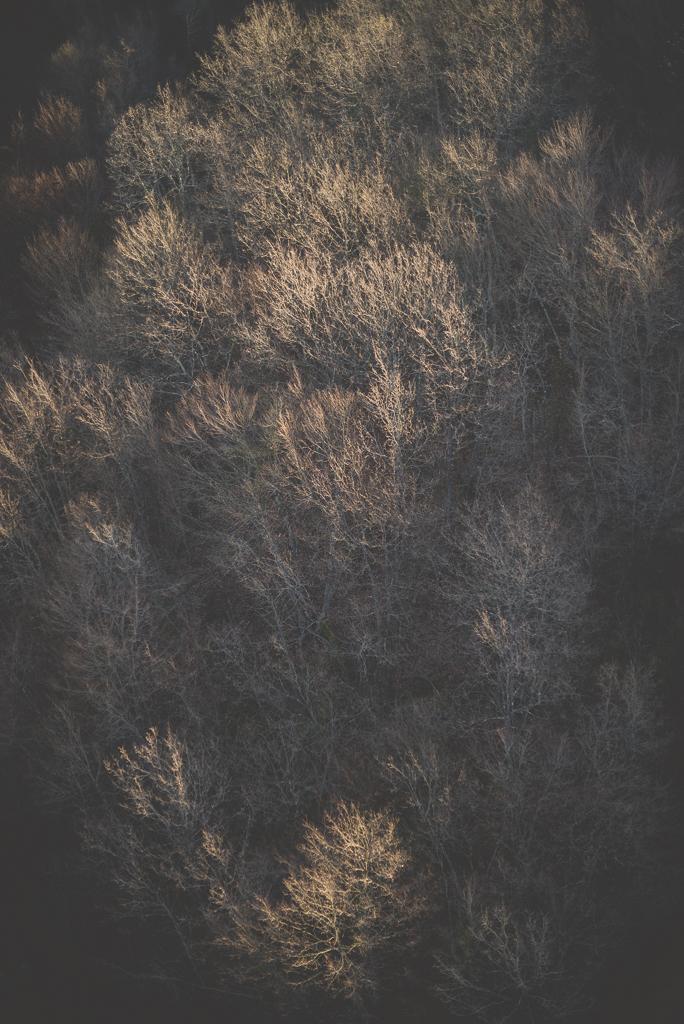 Photos vol montgolfière Haute-Garonne - lumière dans arbres nus - Photographe Toulouse