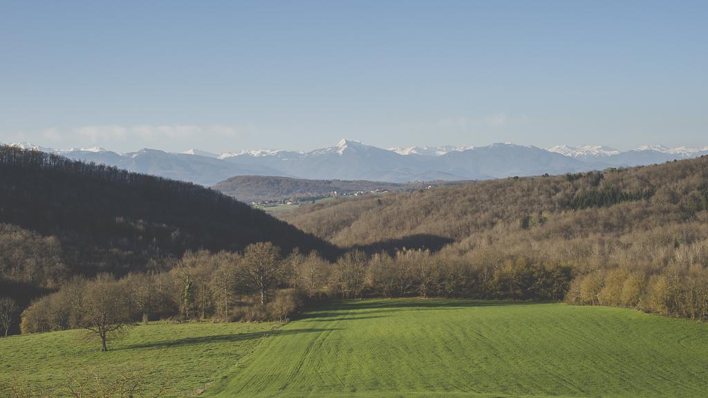 Photos vol montgolfière Haute-Garonne - champ et Pyrénées - Photographe Toulouse