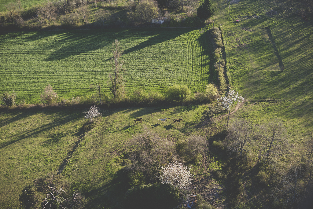 Photos vol montgolfière Haute-Garonne - chevaux galoppant dans les champs - Photographe Toulouse