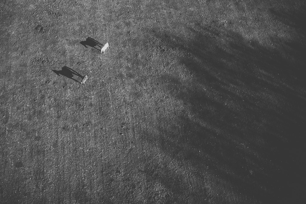Photos vol montgolfière Haute-Garonne - chevaux et ombres - Photographe Toulouse
