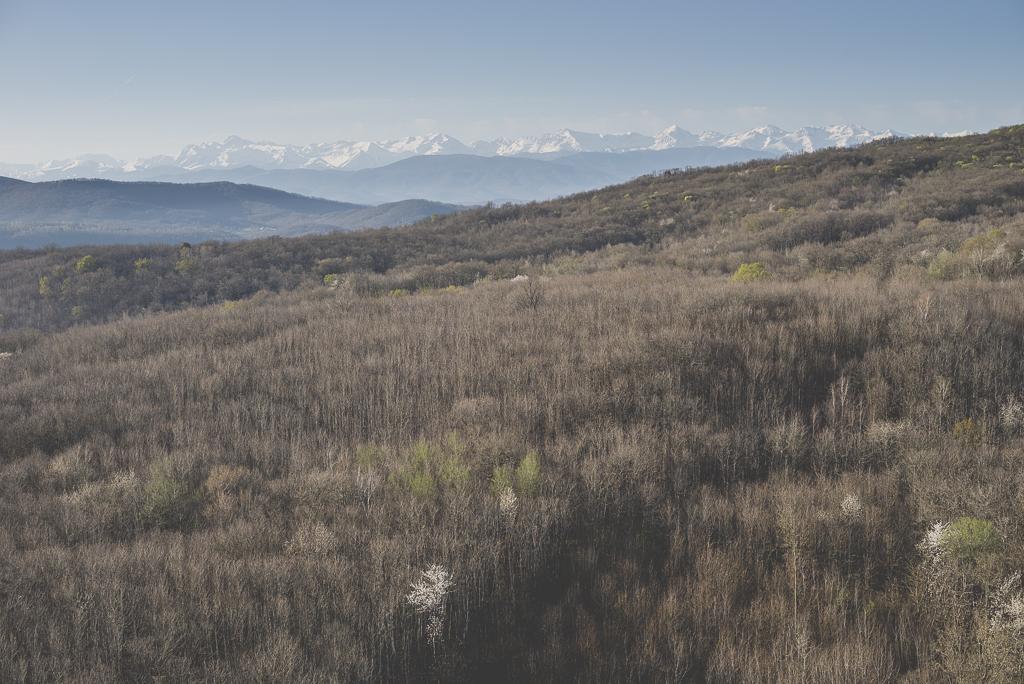 Photos vol montgolfière Haute-Garonne - forêt et Pyrénées - Photographe Toulouse
