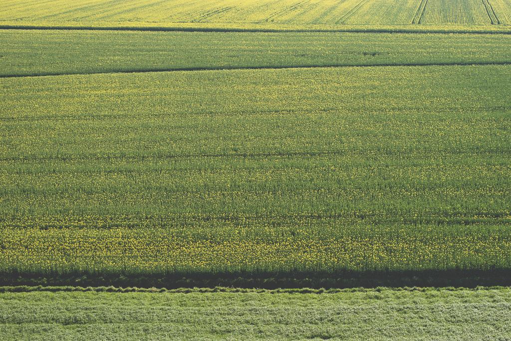 Photos vol montgolfière Haute-Garonne - champs de colza - Photographe Toulouse